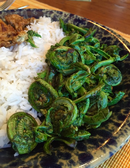 fiddlehead2